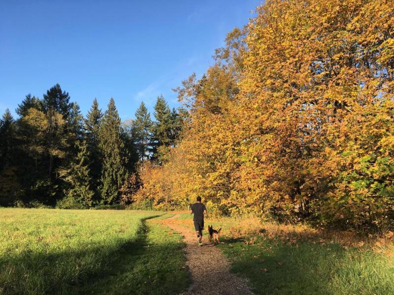 Cougar Trails