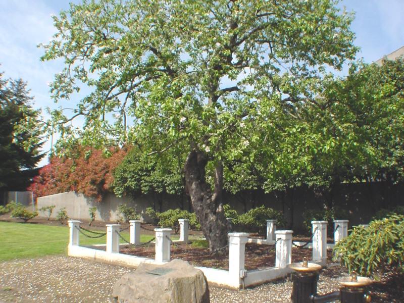 Old Apple Tree Park