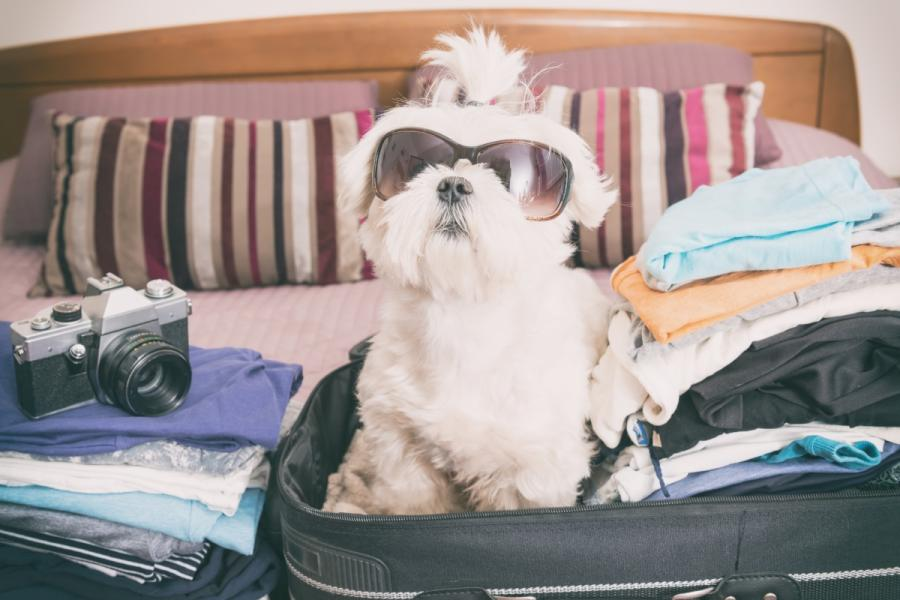 Dog in suitcase ready to head to Lake Lure and the Blue Ridge Foothills