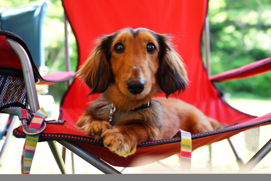 Cute dog sitting in lounge chair