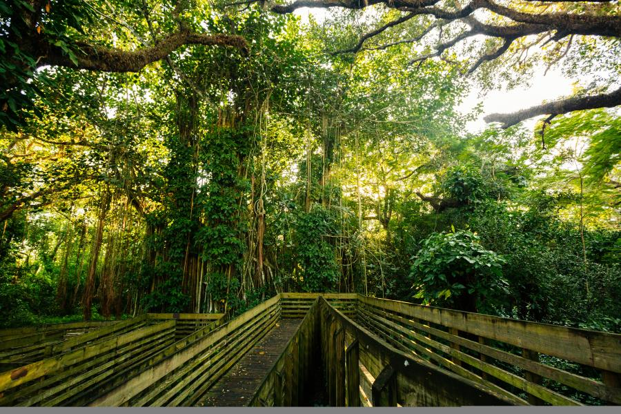 View of trees and paths at Tree Tops Park in Davie, Florida