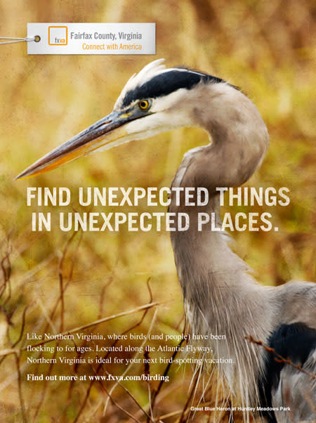 Advertising - Birding