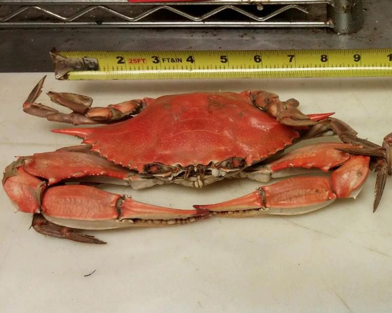 Westpointe Crab House
