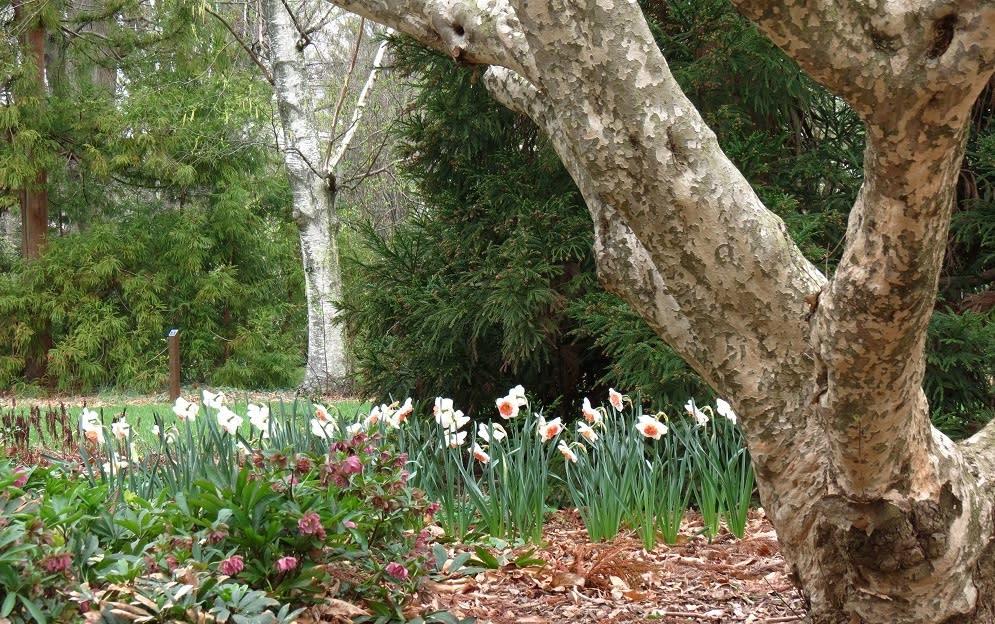 The Barnes Arboretum