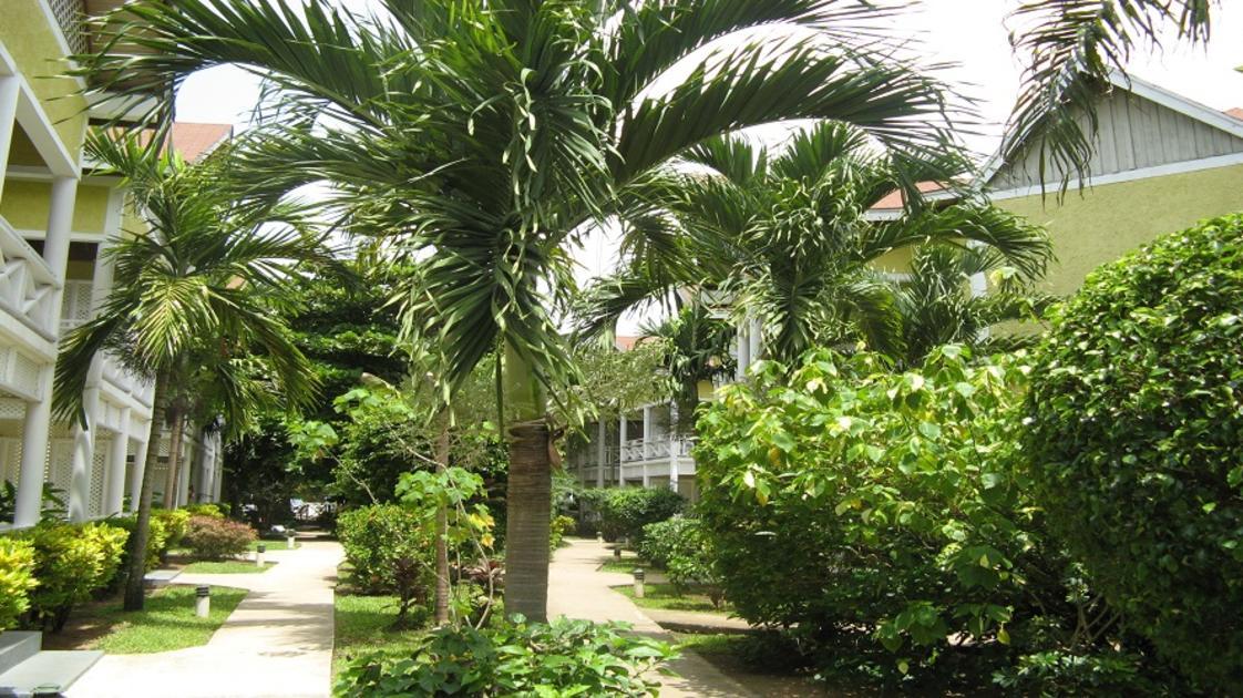 Merrils Beach Resort Greenery
