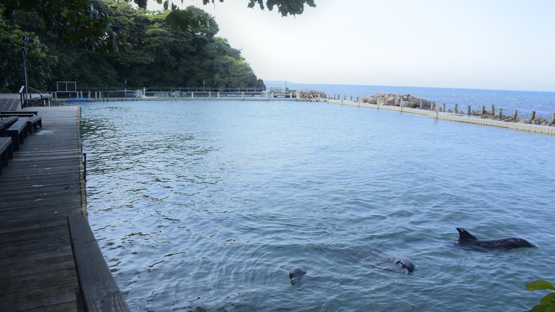 Dolphin Cove, Ocho Rios