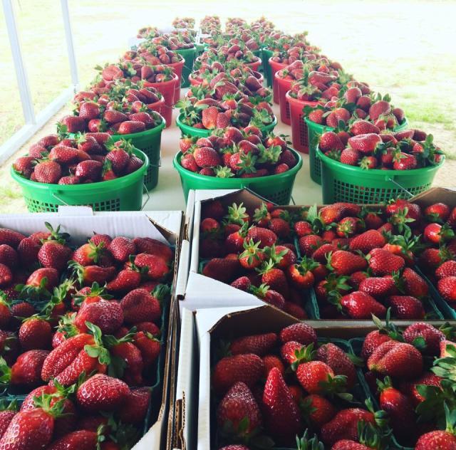 WDW Strawberry Farm Strawberries