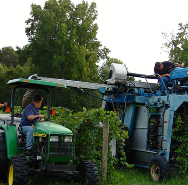 Gregory Harvest
