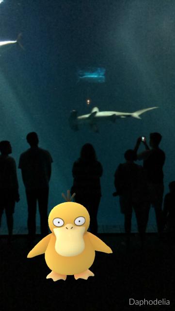 Pokemon at Monterey Bay Aquarium