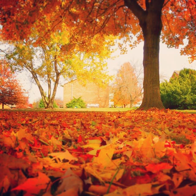 Fall Leaves Blacksburg - Fall Photo