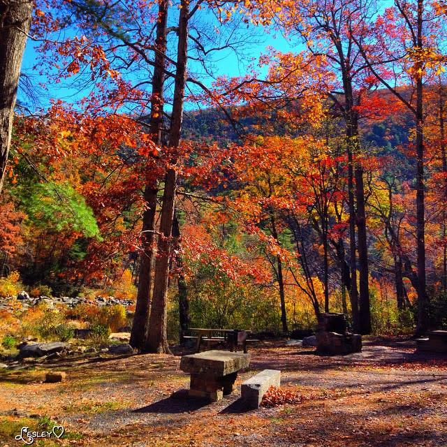 Picnic Area - Fall Photo