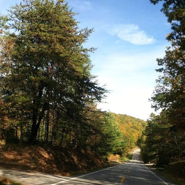 Pine Trees - Fall Photo