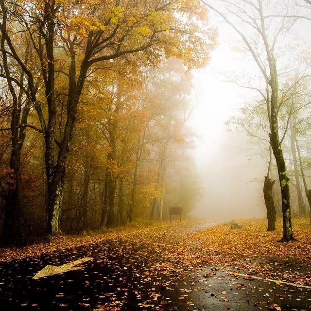 Foggy Road - Fall Photo