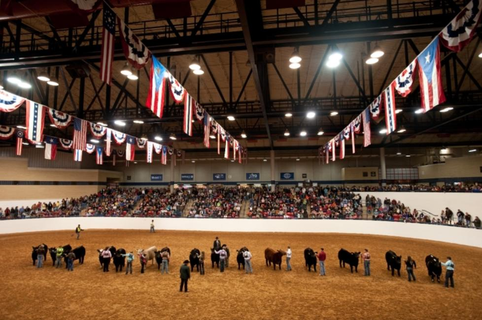 W.R. Watt Arena - Cattle Show