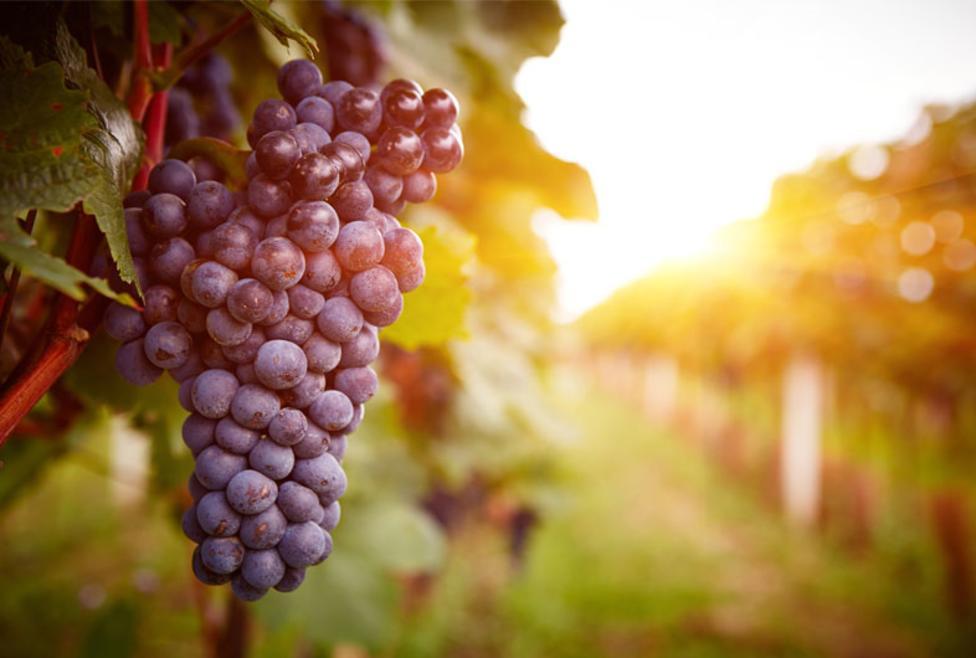 Grapevine Wine Tours