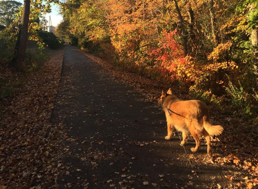 Fall on the Thermal Belt Rail Trail