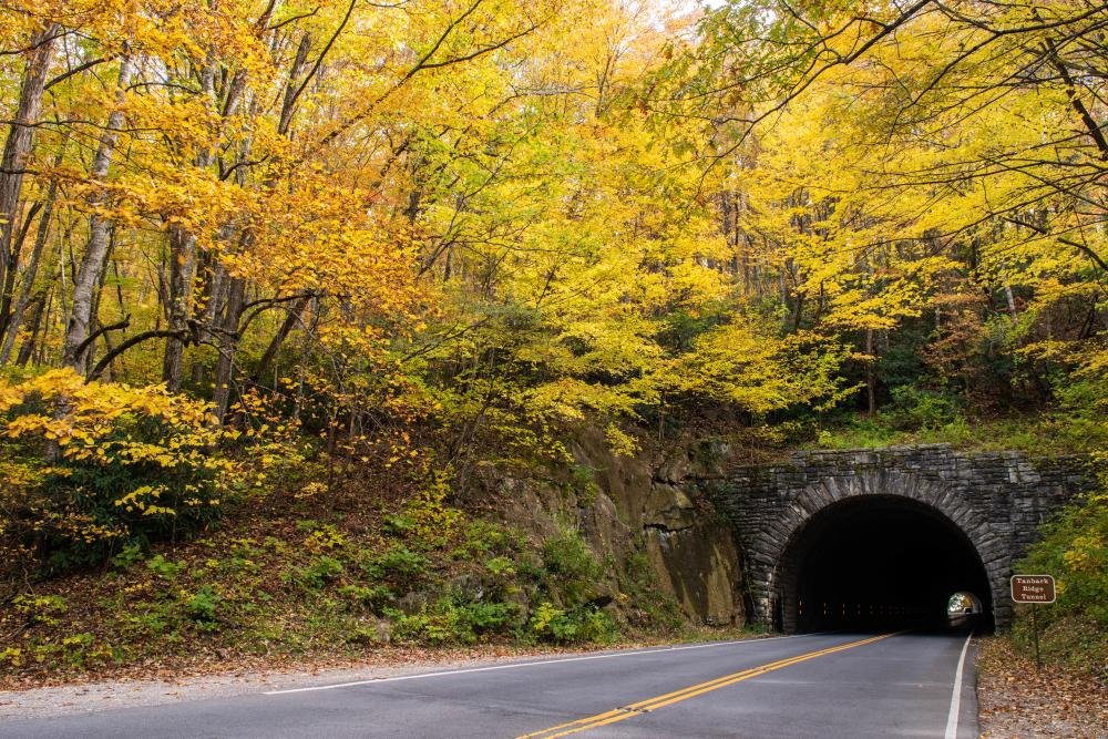 2018 Fall Color Tanbark Tunnel -- October 31