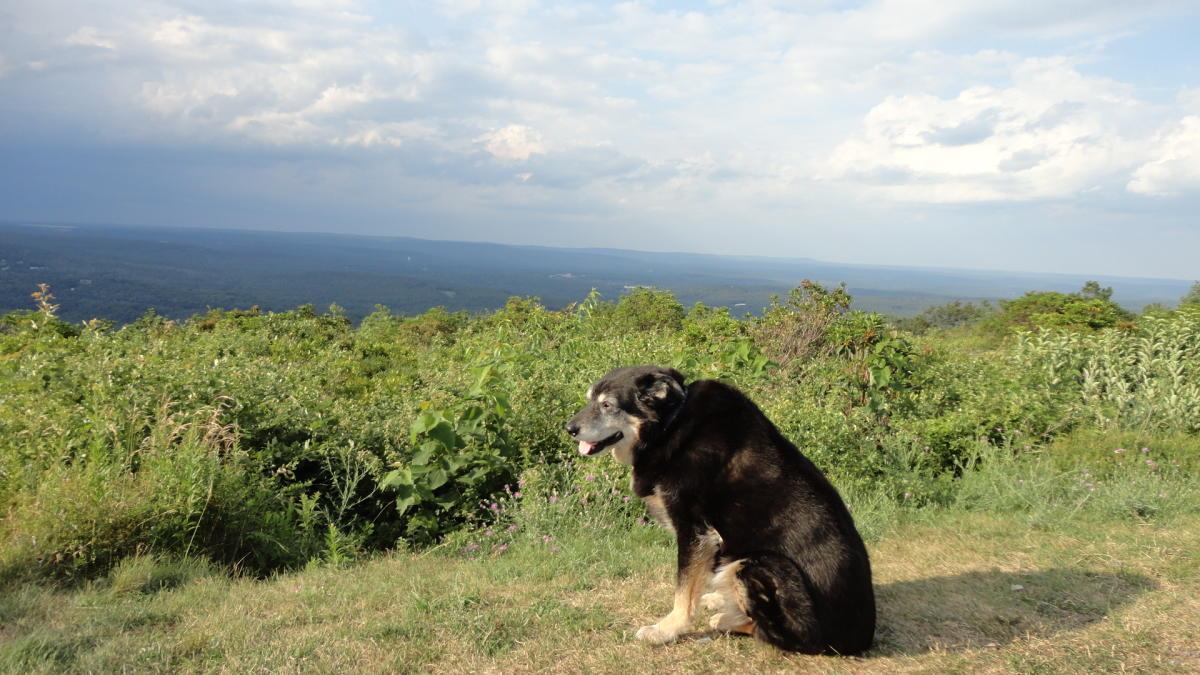 Enjoy the Pocono Mountains with Your Furry Friend