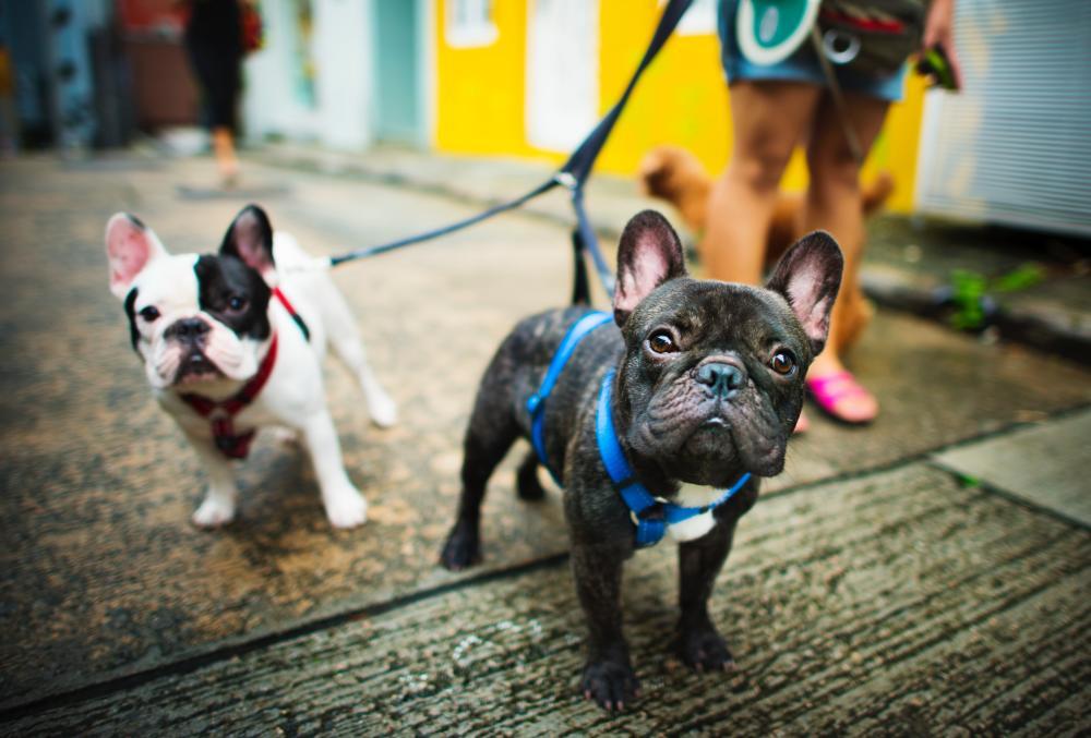 Richmond Dog Festival