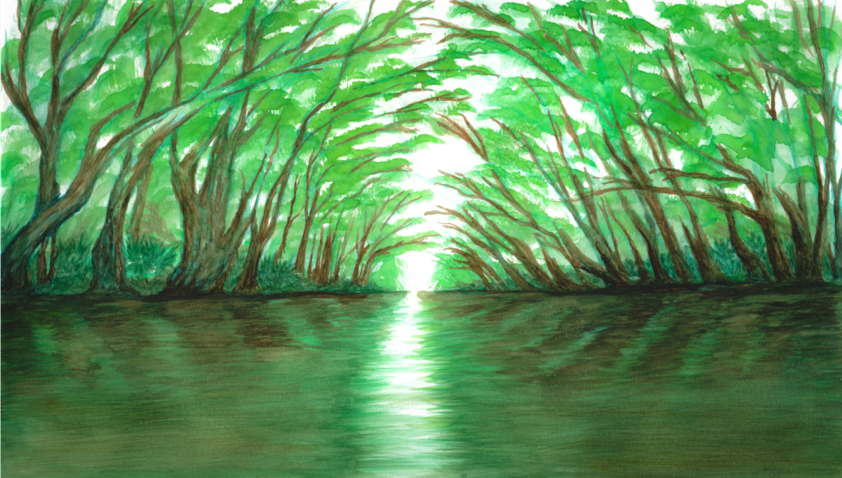 Bayou Vermilion Excursion: Canopy of Trees
