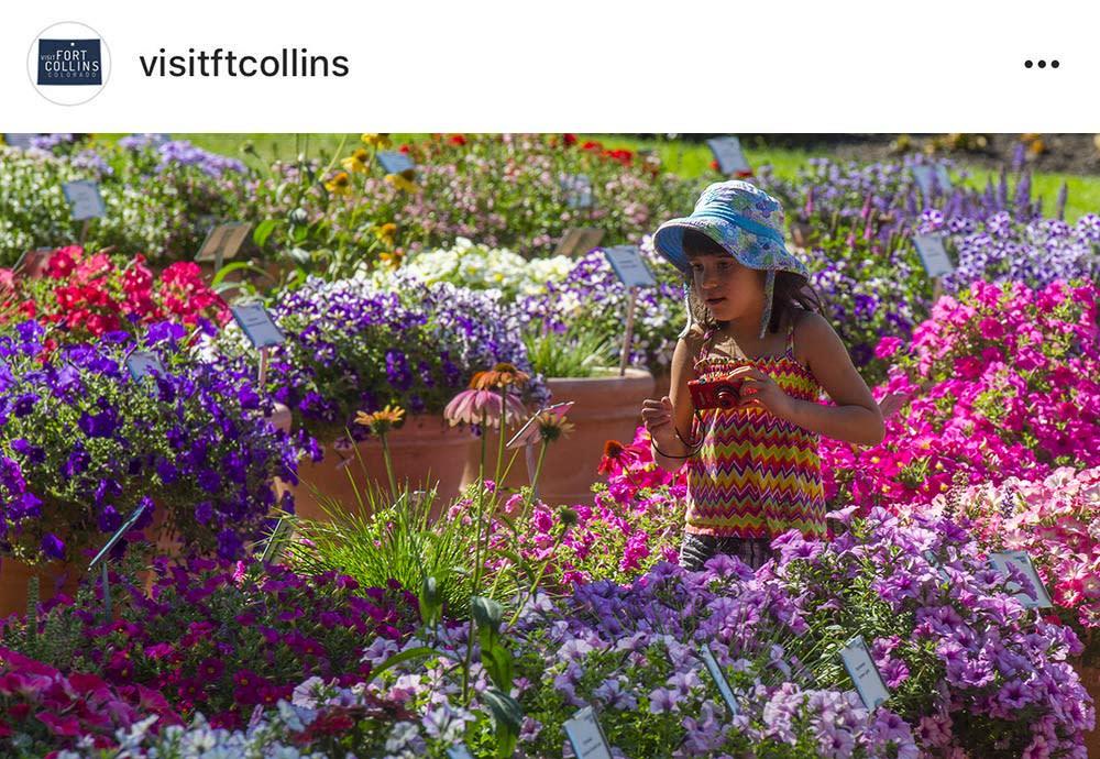Instagrammable-CSU-Flower-Trial-Garden