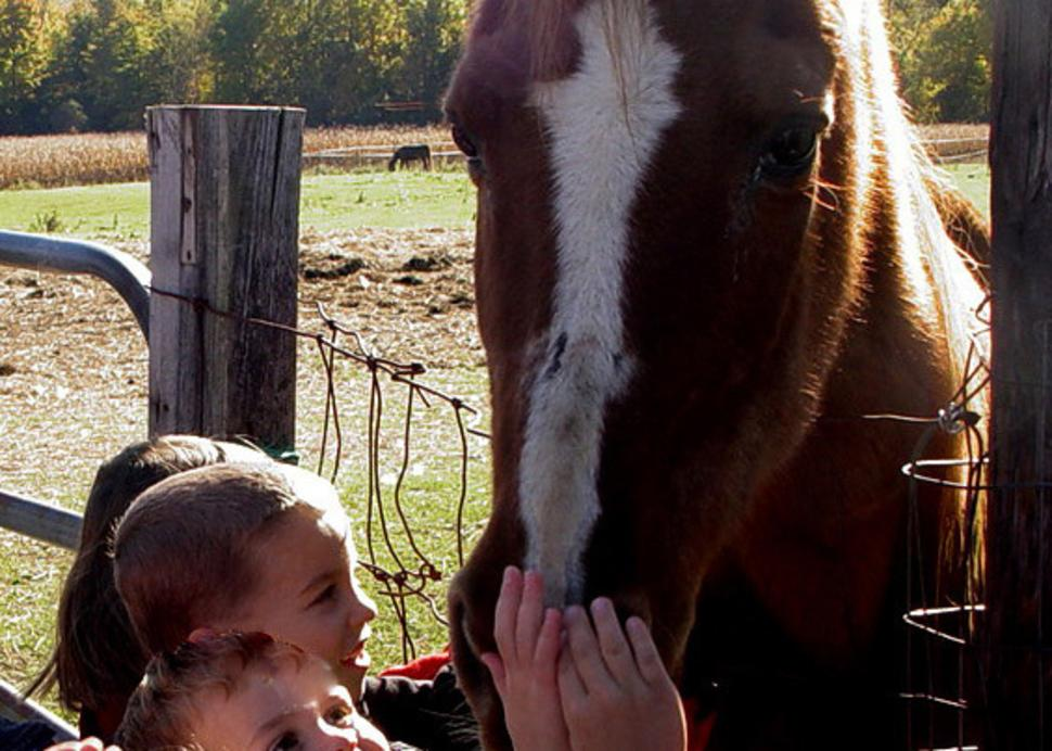 CBP Kids and Horse