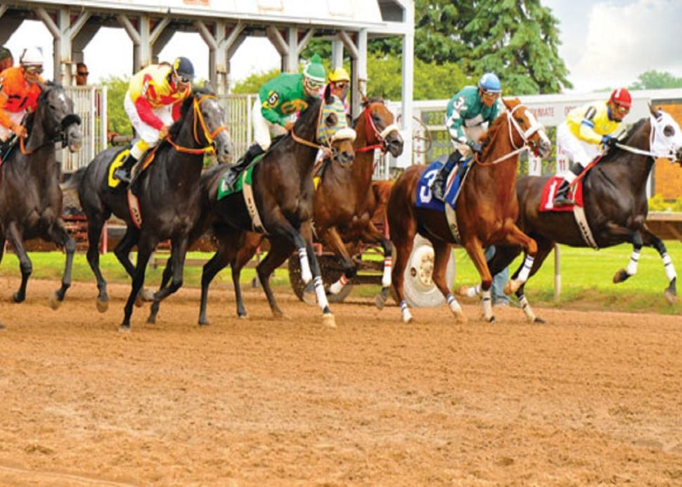 finger-lakes-gaming-and-racetrack-farmington-horses