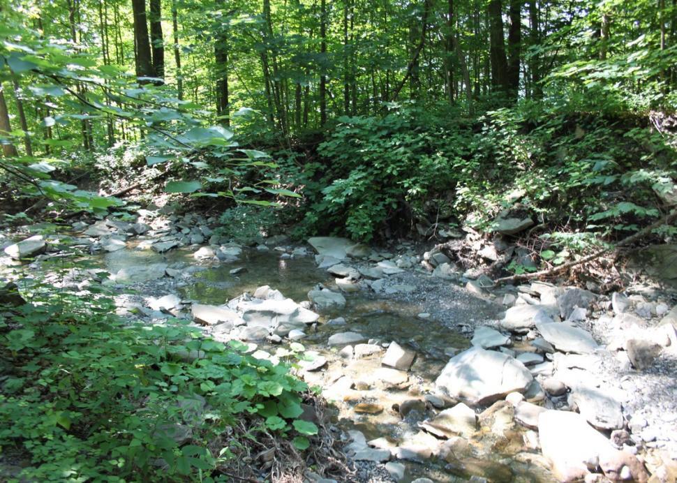 A brook at Hi-Tor