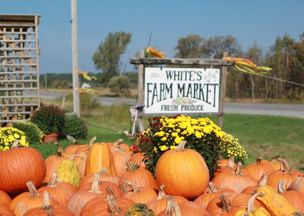 Pumpkins by the sign at White's Farm Market