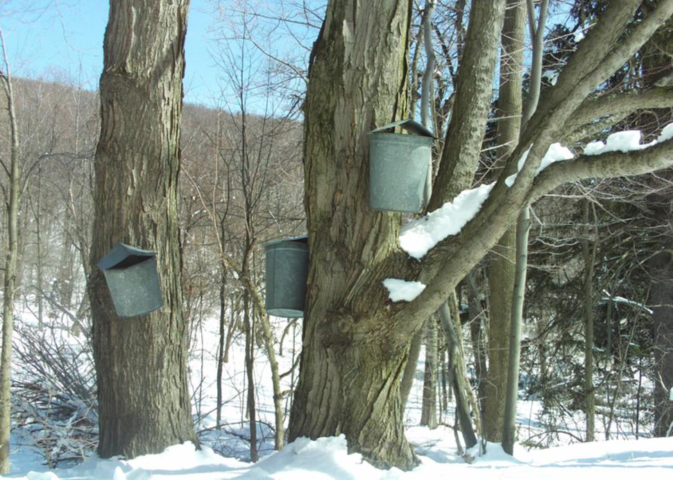 cumming-nature-center-buckets-trees