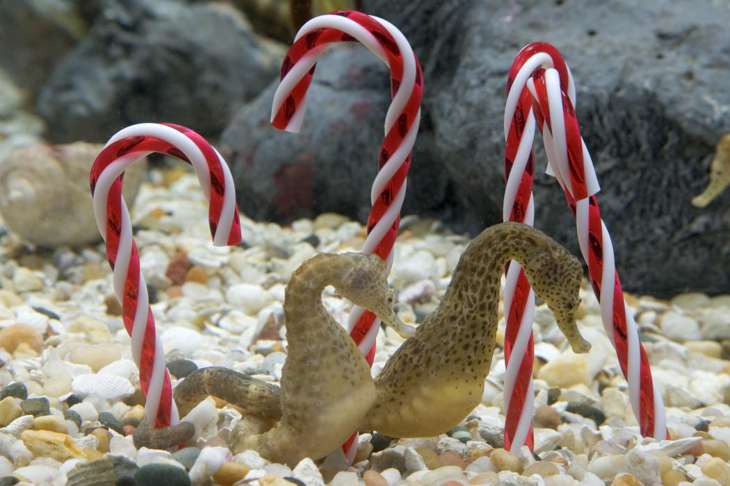 Caroling with the Fishes