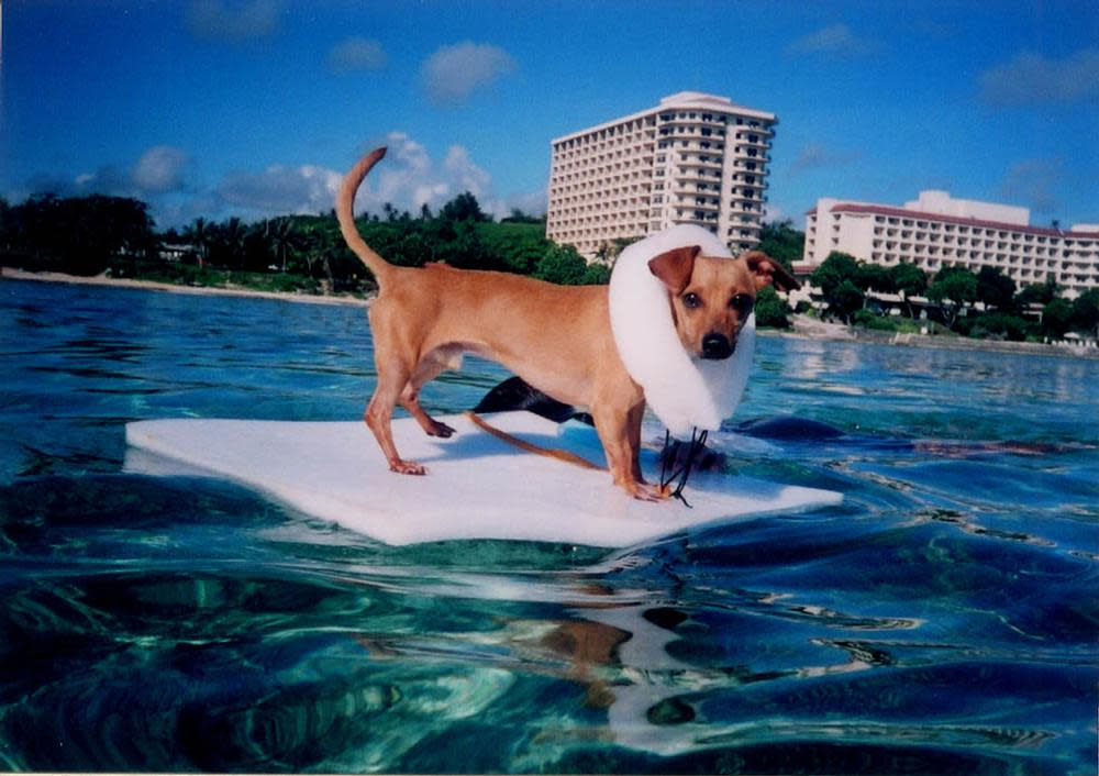 surfin doggy