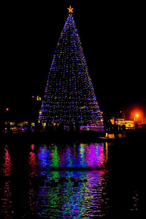 Christmas Tree Lighting Duck Pond