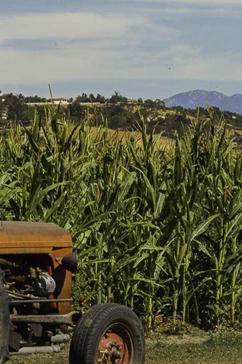 Big Horse Corn Maze and Harvest Festival