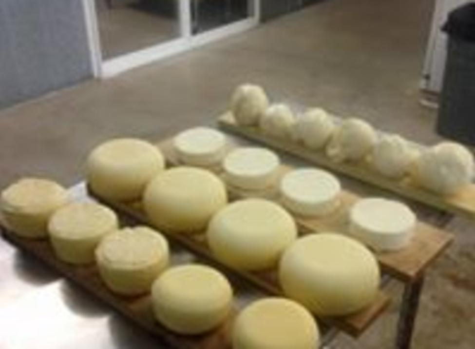 Eagle Mountain Cheese