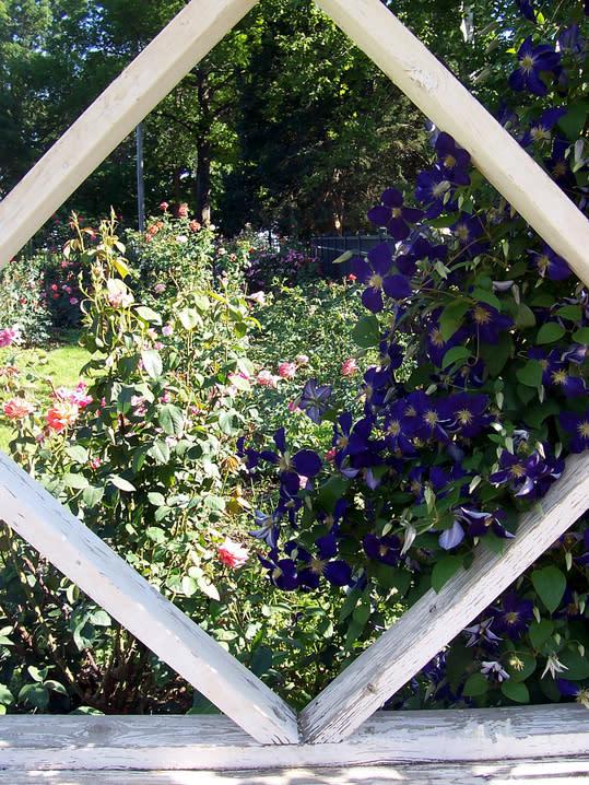 Gage Park - Renisch Rose Garden