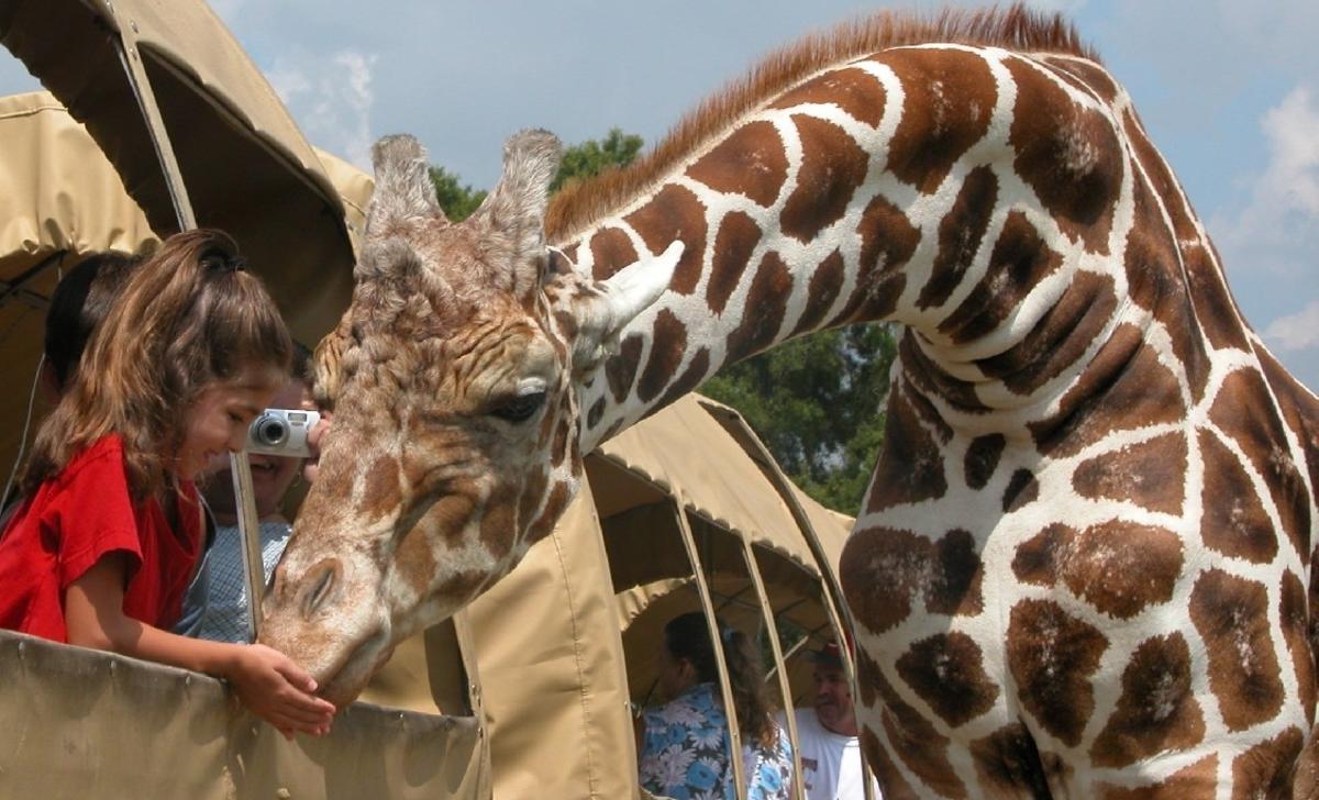 Family taking picture of Giraffes Global Wildlife Center, Folsom