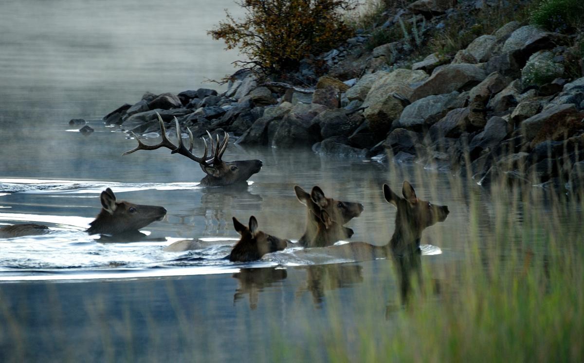 Elk Harem Lake Estes
