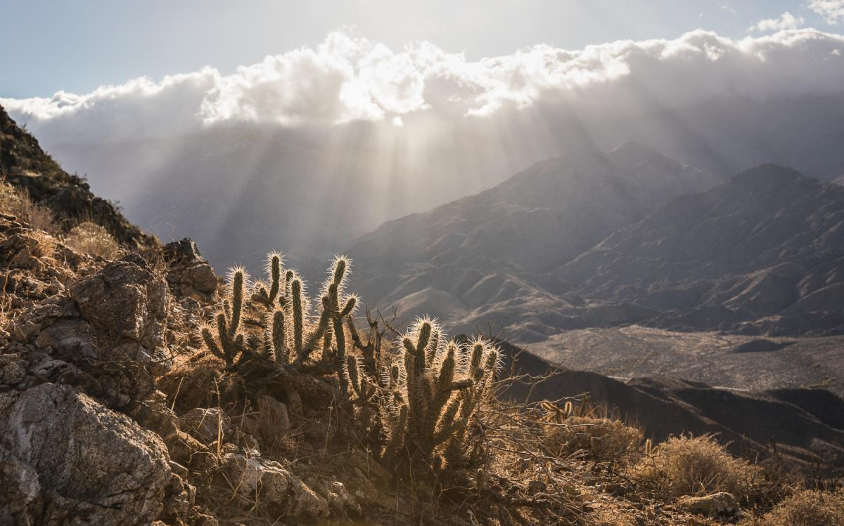 Cholla and mountain views along the Murray Hill trail in Greater Palm Springs