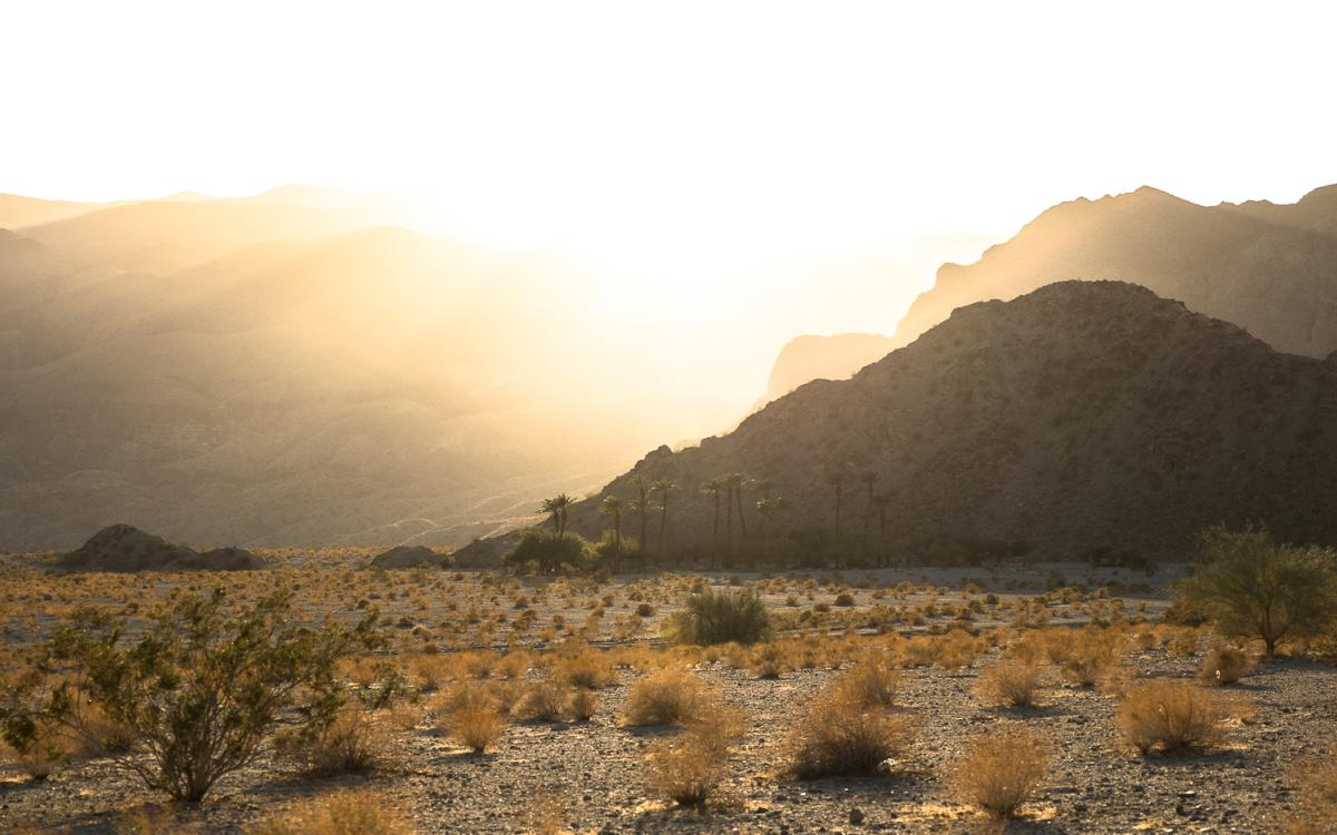 Golden light and palm trees near the Bear Creek Canyon Trail