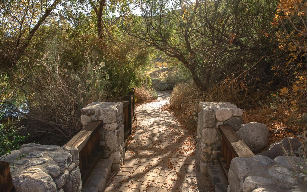 Trees and walkway in the Whitewater Canyon Preserve