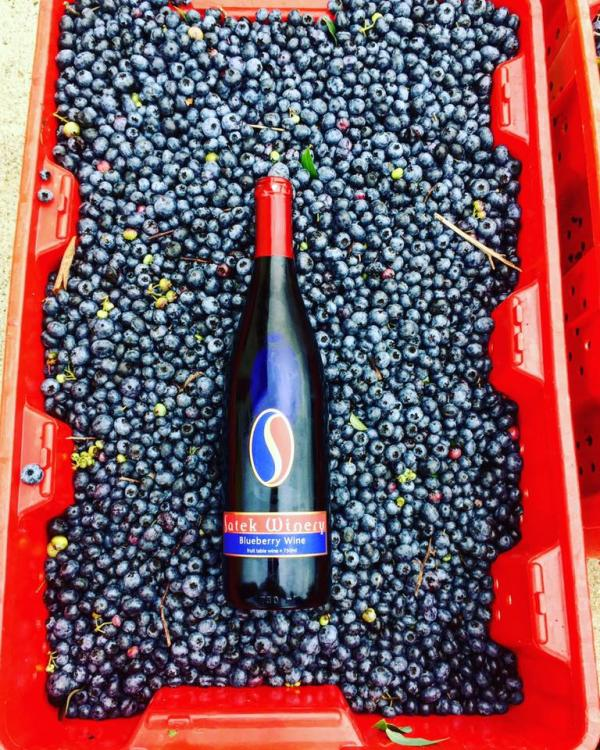 Satek Winery Blueberry Wine