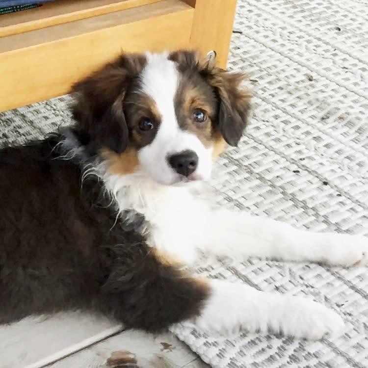 Copy of Pet friendly dog