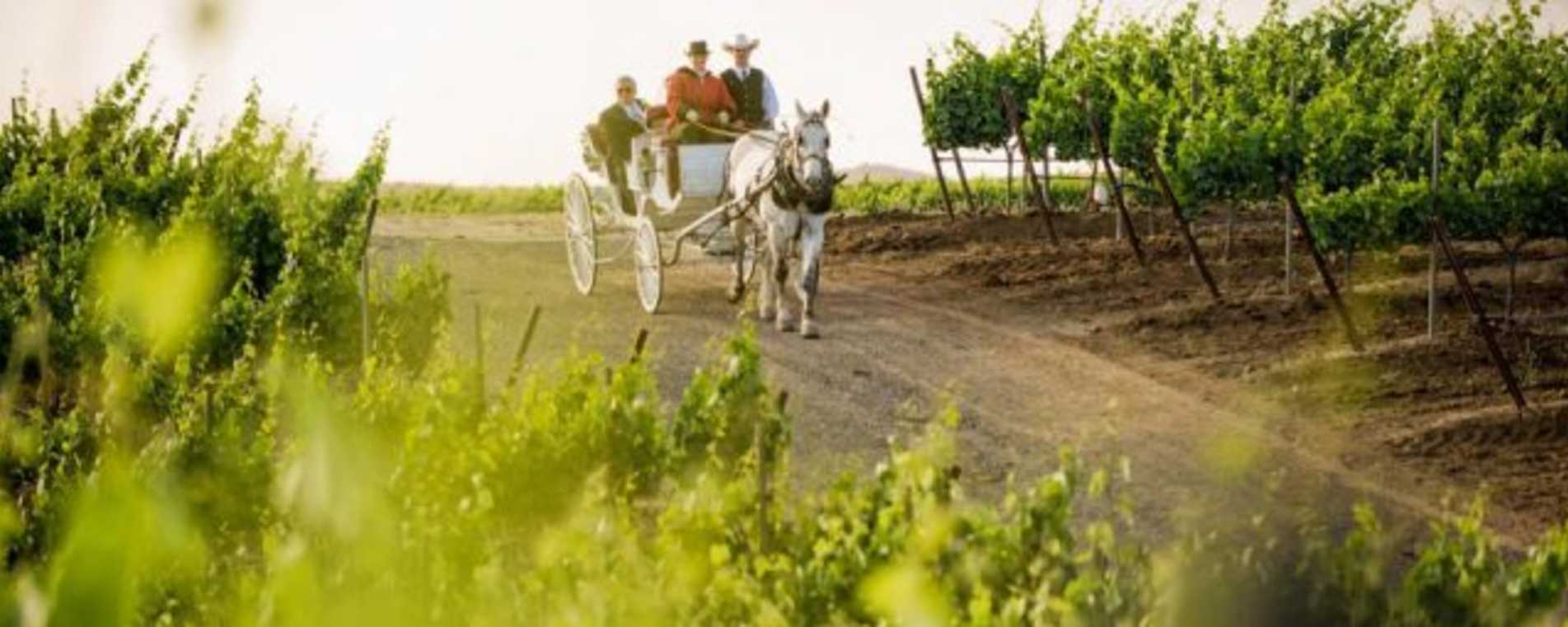 Horse and Carriage Package