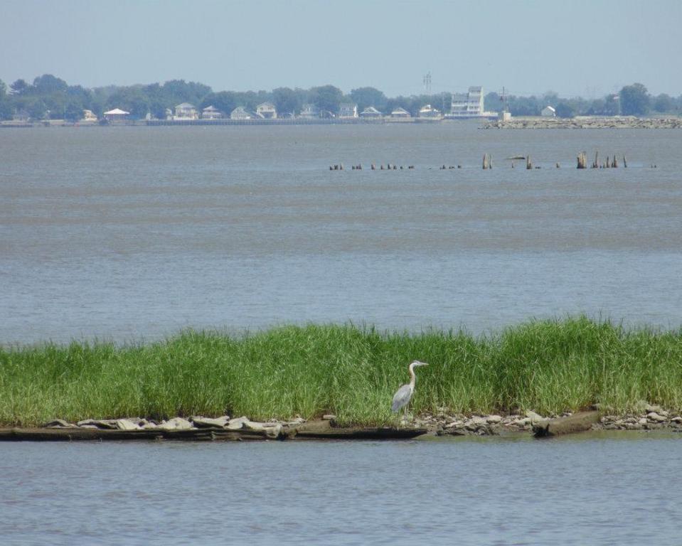 Delaware's Bayshore Byway