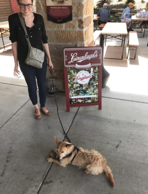 Dog at Leinies