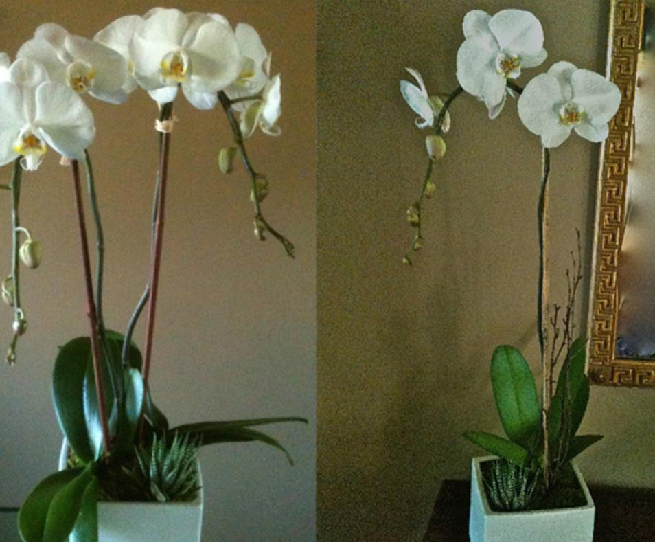 Orchids on El Paseo