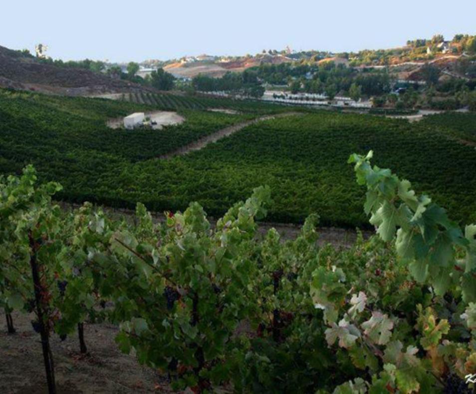 De Portola Wine Trail
