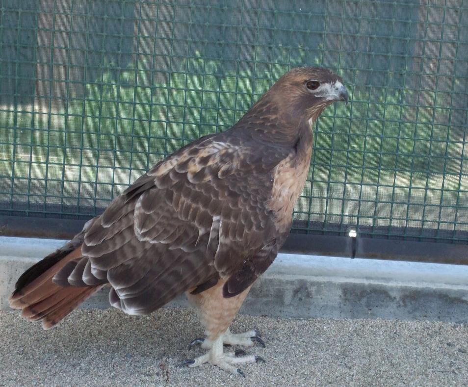 Coachella Valley Wild Bird Center