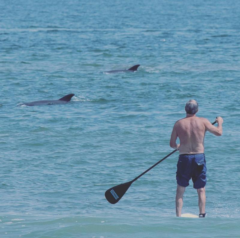 SUP with Dolphins